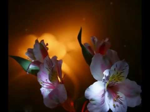 """ LAKME"" THE FLOWER DUET - LEO DELIBES"