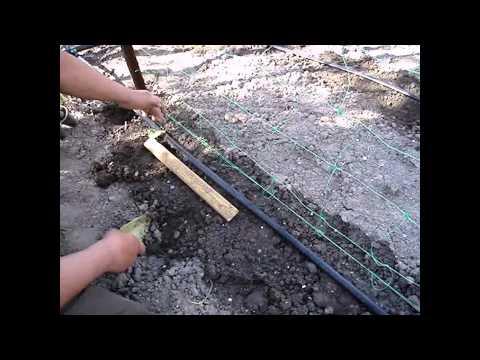 Как посадить огурцы в открытый грунт?