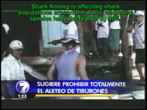 Costa Rica promotes global fins atached policy against shark finning