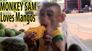 Monkey Loves the Mango USA