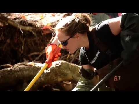 Forestry & Environmental Management At UNB (Fredericton)