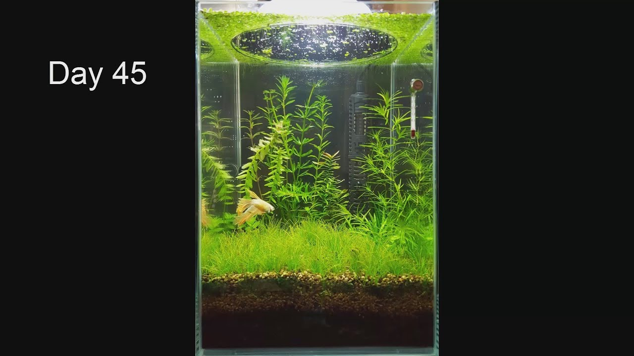 No filter no co2 no ferts mini planted tank 2 months for Co2 fish tank