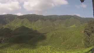 Cameron Bharat tea plantation en Cameron Highlands