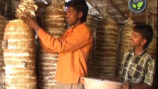 Shed, Infrastructure and Preparations for Oyster Mushroom Cultivation
