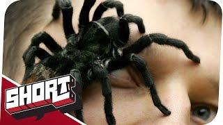 Arachnophobie - Der krabbelnde Horror!
