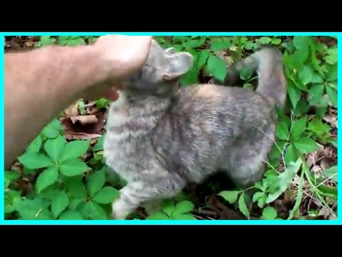 Abandoned Pets - Cat Rescue_New
