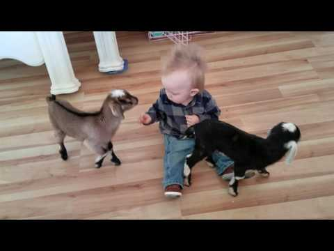 Baby and Baby Goats
