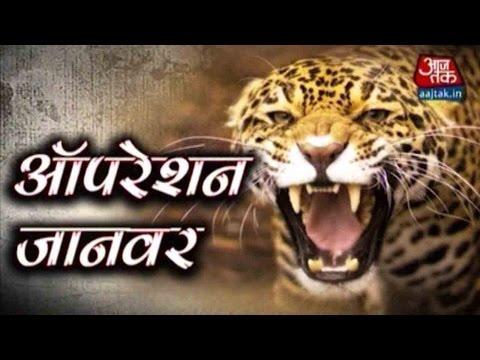 Vardaat: Leopard Enters House, Injures One In Agra