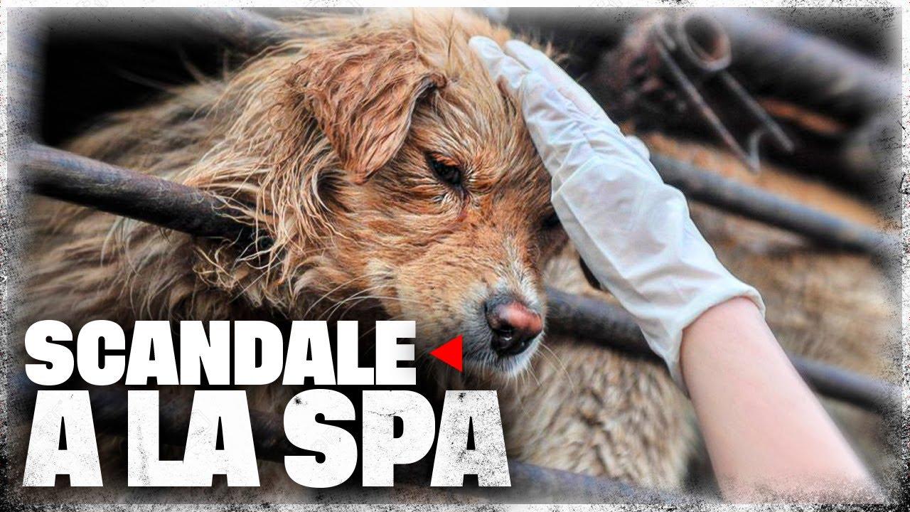 Download Scandale à la SPA
