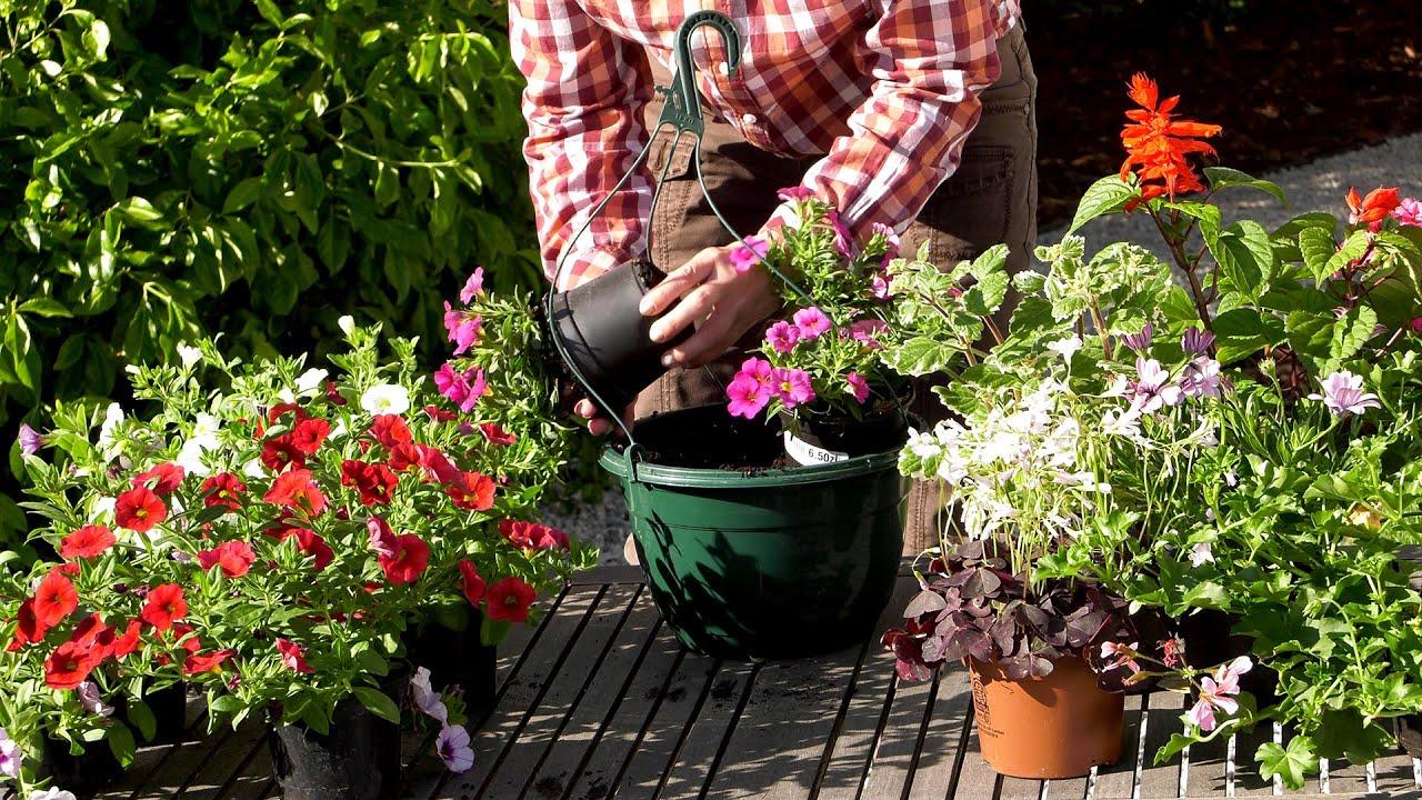 Petunie Calibrachoa Kwiaty Na Balkon I Taras Youtube Backyard Decor Garden Decor Plants