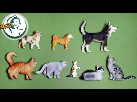 Learn special cats and dogs for kids with sounds