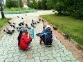 Голуби вы голуби голуби мои mp3