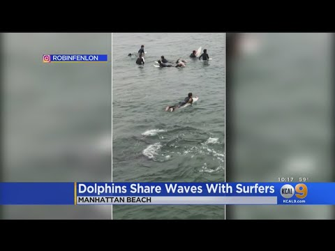 There's Something In The Water -- Hundreds Of Dolphins