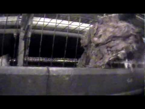 The Truth About Sparboe Farms: Cruel to Animals & Dishonest to Customers