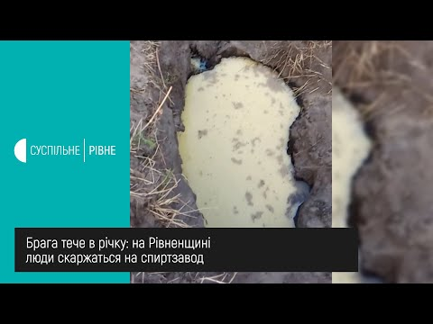 Суспільне Рівне: Брага тече в річку: на Рівненщині люди скаржаться на спиртзавод