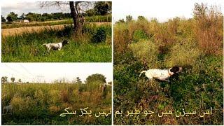 Quail Hunting | Fails in Hunting this Season | GSP Dog Hunting | German Shorthaired Dog Hunting