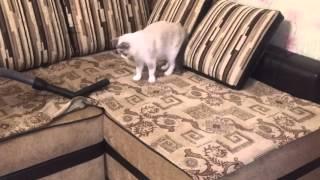 Кошка и пылесос. Смотреть всем. Очень забавно и смешно.