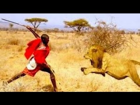 Most Dangerous Animal Attacks On Humans 1 Lion Leopard