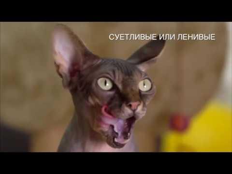 Гипоаллергенный корм для кошек Brit Care