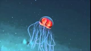 Неизвестные обитатели  морских глубин