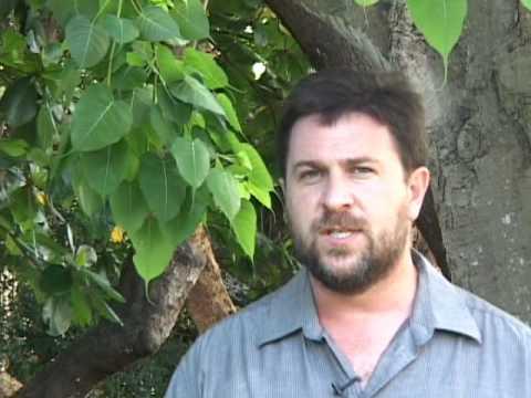 Ethnobotany & Religion: Plants in Buddhism
