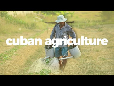 How Cuban agriculture went from industrial to sustainable