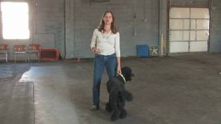 Dog Training : How To Train A Guard Dog