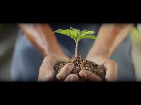 We Are Growing Asia - An Introduction to Asia Plantation Cap