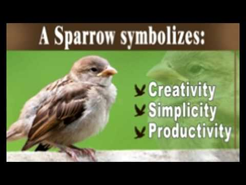The Beautiful And Powerful Symbolic Meaning Of Sparrows