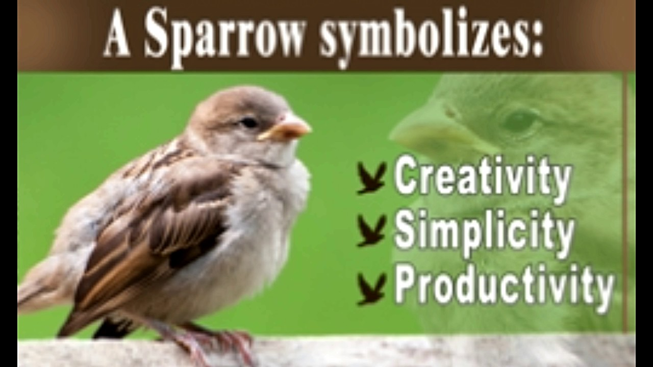 The Beautiful And Powerful Symbolic Meaning Of Sparrows Youtube