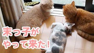 2匹の先輩猫の反応は…。3姉妹ニャンコの絶妙な距離感♡