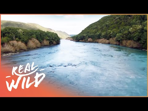 Wild River Journeys: Clutha [New Zealand Documentary] | Wild Things