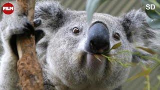 AUSTRALIA  - seria Imax, cały film