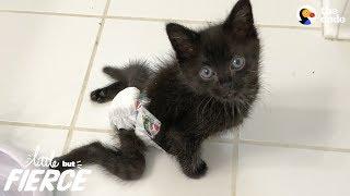 Paralyzed Kitten Is Sassiest Cat Her Foster Mom's Ever Seen - RAVEN | The Dodo Little But Fierce