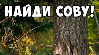 ТЕСТ-ИГРА найди животное на фото 🐛 БУДЬ В КУРСЕ TV