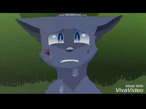 Коты Воители (Песня) Прятки.