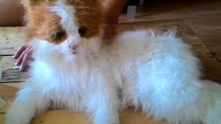 HASBRO Interaktívna mačička Fur Real od 57.90€ 😊. NajNakup.sk cb51e95ccbd