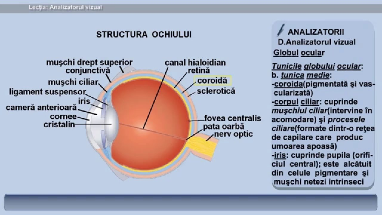 probleme cu acuitatea vizuală