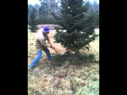 How to cut a Christmas tree in under 60 seconds