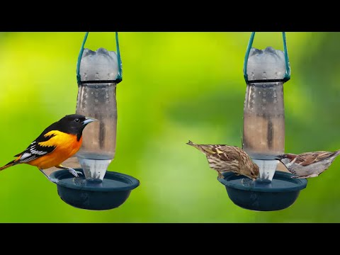 how-to-make-bird-water-feeder,-diy-homemade-plastic-bird-water-drinking-pot,