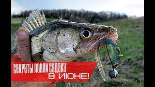 Как ловить судака в июне?
