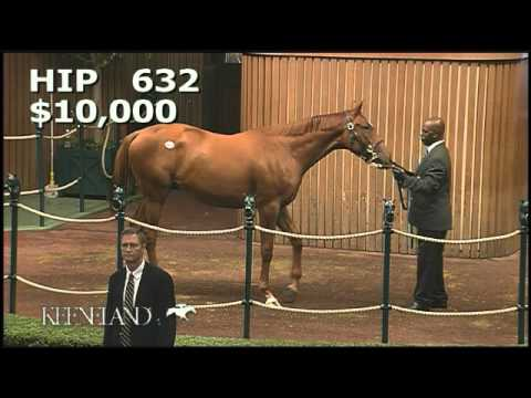 Animal Kingdom Hip 632