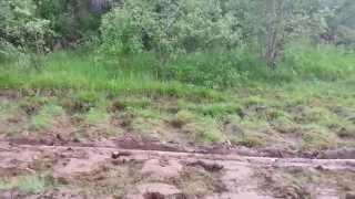 Viano 4Matik грязи не боится.(Столько проехал по асфальту а как работает 4Matik. Вот и решил проверить. Работает всё отлично резина подкачала!, 2014-06-01T13:42:13.000Z)