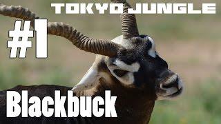 Tokyo Jungle: BlackbuckSurvive over 100 years Part 1 of 4