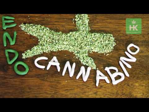 How cannabis effects the brain