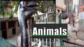 Suturmurg and all birds  with Dohrighat Asmasanghat funny Animals 2019