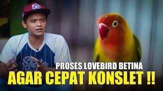 Download lagu LOVEBIRD BETINA JADI KONSLET !! RESEP KONSLET NOVI BANJARNEGARA