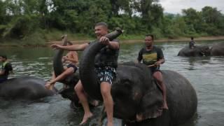 Прикол! Купание со слоном!!!