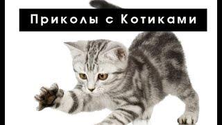 Приколы с котами! СУПЕР ПОДБОРКА!...
