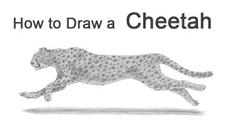 How to Draw a Cheetah Running(Visit http://www.How2DrawAnimals.com where every step is broken down to an individual image for an even easier tutorial and don't forget to PAUSE the video ..., 2016-03-19T06:05:17.000Z)